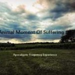 Apocalyptic Frequency Experience – Animal Moment of Suffering